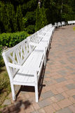 White Wooden Benches in the park, summer day Stock Images