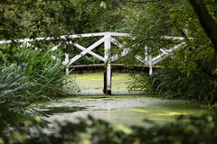 White Wooden Bridge on Body of Water Surrounded With Green Leafed Trees during Daytime Stock Image