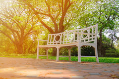 White wooden chair in the garden. White wooden chair with blurred big tree in the garden Stock Images