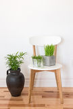 White wooden chair with green plants Stock Images