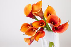 White wooden chair with orange calla lily (lilies). White wooden chair with orange calla lily (Lilies, Zantedeschia aethiopica, Lily of the Nile, Easter lily Stock Image