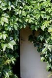 Wooden door and leaves of grapes royalty free stock photos