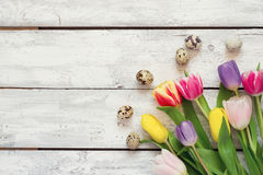 White wooden Easter background with tulips and eggs Royalty Free Stock Image