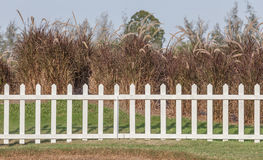 White wooden fence in farmland marks and dry trees background. Royalty Free Stock Photos