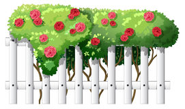 A white wooden fence with flowering plants Stock Photography