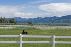 White Wooden Fence in Wyoming Royalty Free Stock Photos