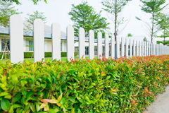 White wooden picket fence with green plant hedge. White wooden picket fence with green plant hedge under sun light Stock Photo
