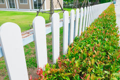 White wooden picket fence with green plant hedge. White wooden picket fence with green plant hedge under sun light Stock Photos