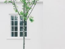 White Wooden Side by Side Window Frame Royalty Free Stock Image