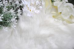 White Wool Background Decorated with Flowers Royalty Free Stock Images