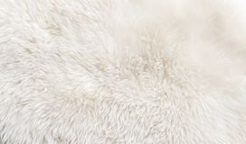 White natural animal wool fur texture background stock photo
