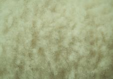 White wool texture close-up Royalty Free Stock Photo