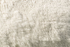 White woolly sheep fleece. For background and texture Stock Images