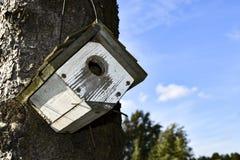 WHITE WREN BIRDHOUSE HANGING ON TREE stock image