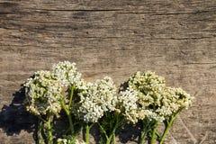 White yarrow flowers Achillea millefolium on wooden background stock photo