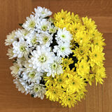 White and yellow chrysanthemum flowers Stock Photos