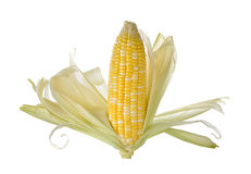 White and yellow corn with shell on white Royalty Free Stock Photos