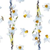 White yellow daffodils on a white background. Seamless pattern vector illustration