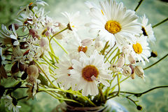 White and yellow daisies in vase close up against blurred backgr Stock Images