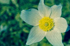 White and Yellow Flower during Daytime Royalty Free Stock Photo