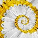 White yellow flower surreal clock abstract fractal spiral. Floral watch clock unusual abstract texture fractal background stock photo