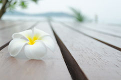 White yellow flower on wood floor. White yellow flower on wood stripe floor with blurry tree and mountain in background Stock Photography