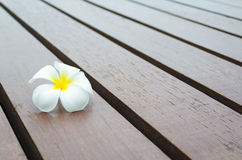 White yellow flower on wood stripe floor. One white yellow flower on rough wood stripe floor Royalty Free Stock Photography