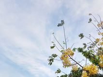 White and Yellow Flowering Tree Against Cloudy Sky. Low Angle View of White and Yellow Flowering Tree Against Cloudy Sky stock photo