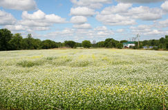 White and yellow flowers. Field of white and yellow wild flowers Stock Photo