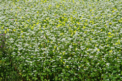 White and yellow flowers. Field of white and yellow wild flowers Stock Image