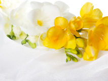 White and yellow flowers Royalty Free Stock Images