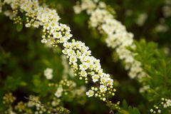 White and yellow flowers against green background Stock Images