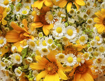 White and yellow flowers. Bouquet of white and yellow flowers royalty free stock photography