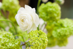 White and yellow flowers bouquet Stock Photography
