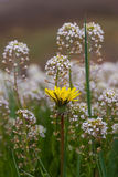White and Yellow Flowers in Meadow Stock Photography