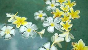White and yellow flowers in swimming pool. At luxury villa stock video footage