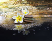 White and yellow fragrant flower plumeria or frangipani on cryst. Alline water and pebble rock for spa meditation mood, plumeria or frangipani on peace nature Royalty Free Stock Photography