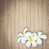 White and yellow frangipani flower on wood background Stock Images