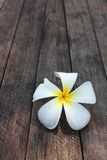 White and yellow frangipani flowers. With wood in background Royalty Free Stock Photography