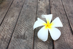 White and yellow frangipani flowers. On natural fibre background Stock Photo