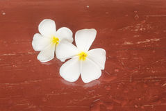 White and yellow frangipani flowers with wood in background Royalty Free Stock Photo