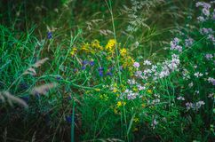 White, yellow, lilac, pink meadow grass in a summer field. Multi-colored medicinal herbs in a country field. Macro. Soft focus. Sh stock photo