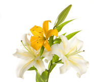 White and yellow lilies ' bunch Royalty Free Stock Photo