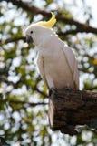 White and yellow parrot stock photos
