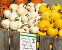 White and Yellow Pie Pumpkins For Sale at an outdoor Farmer's Market Royalty Free Stock Images