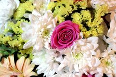 White, yellow and pink beautiful flowers Stock Photography