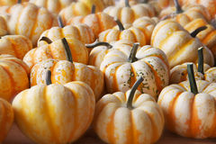 White Yellow Pumpkin Squash Stock Photo