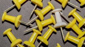 White among yellow pushpins. royalty free stock images