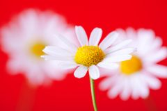 White & yellow & red Royalty Free Stock Photos