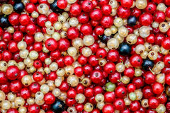 White or yellow, red,  black  raw currant background Royalty Free Stock Photo
